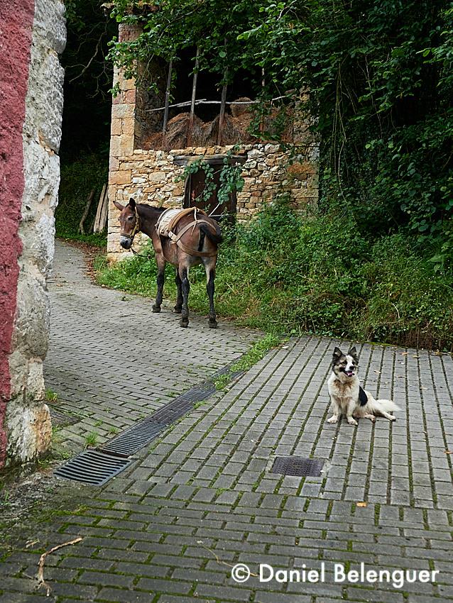 Escena callejera en Proaza. Aqui los personales son de 4 patas, muy simpáticos y nada reticentes a salir en las fotografías!