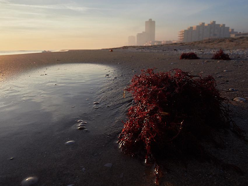 © Daniel Belenguer, algas en la playa del Perellonet.
