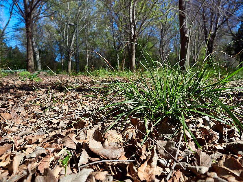 Zona recuperada donde el cúmulo de hojas y materia orgánica favorece la vida.