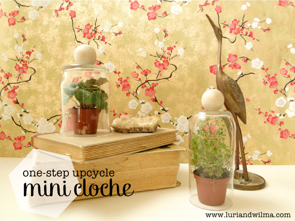 One Step Upcycle - DIY Mini Cloche.png