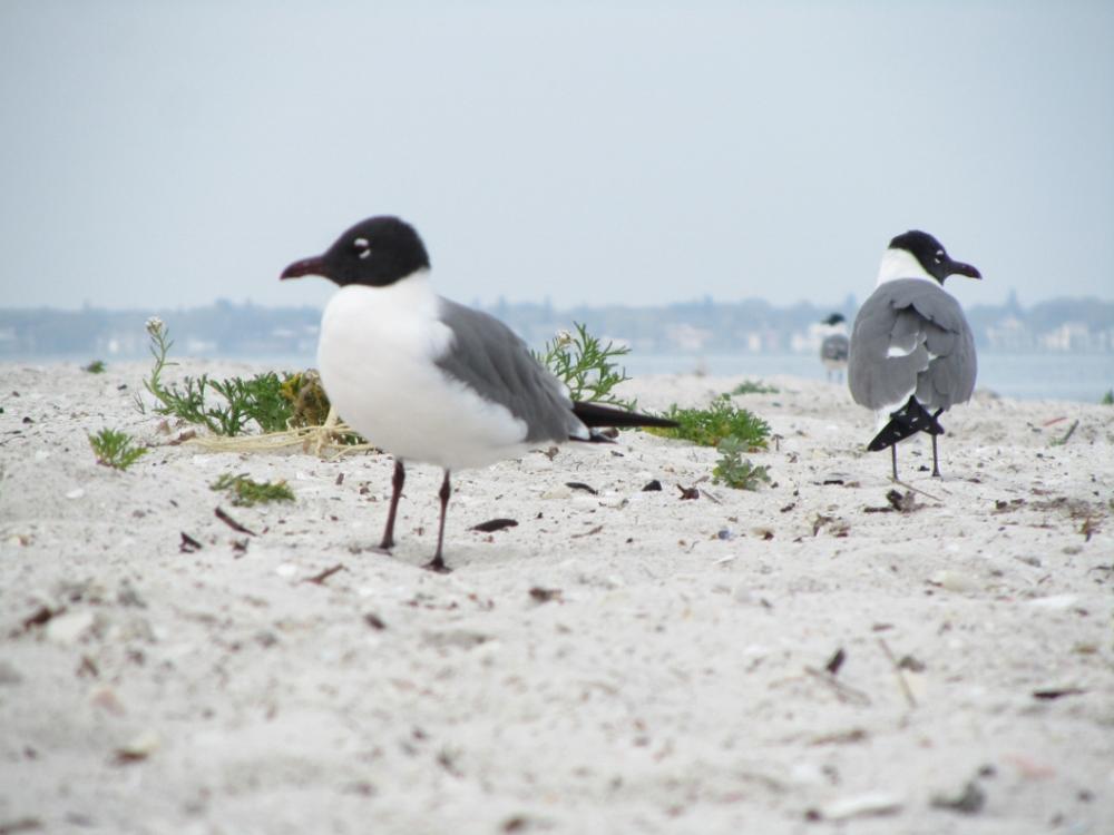 Florida 2011-090 (1000x750).jpg