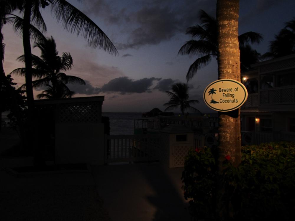 Florida 2011-134 (1000x750).jpg