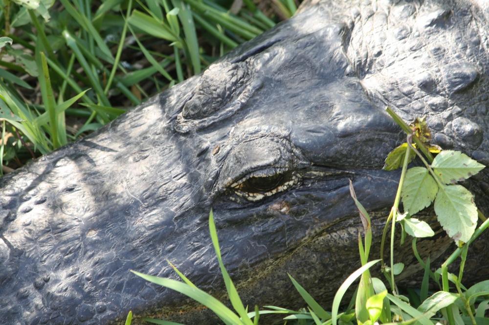 Florida 2011-117 (1000x666).jpg