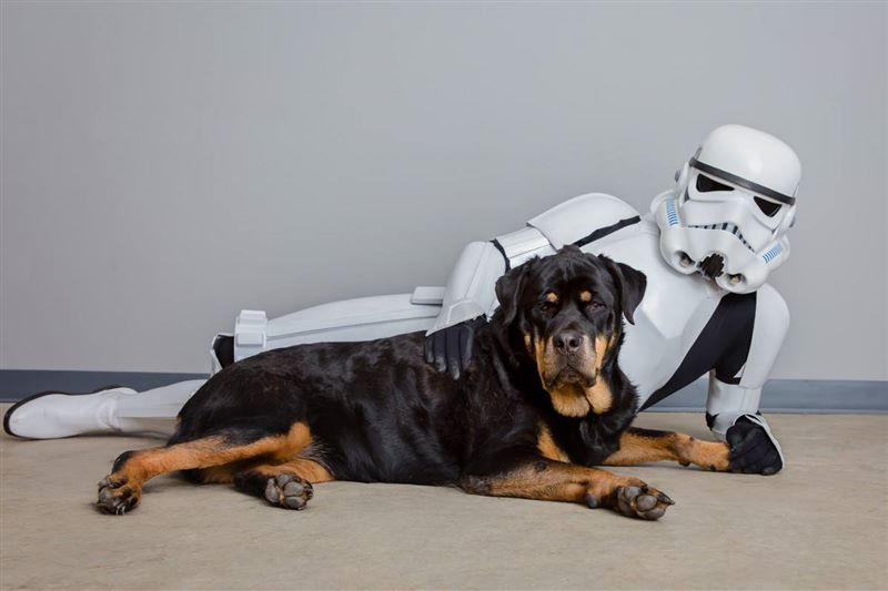 Best-Friends-Animal-Society-adoption-Star-Wars-dog.jpg