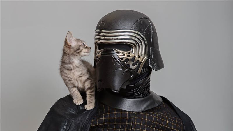 Best-Friends-Animal-Society-adoption-Star-Wars-cat.jpg