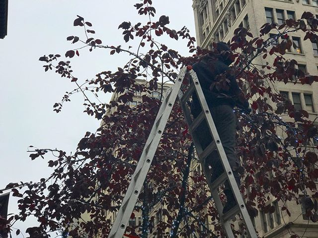 Cool breeze and ladders in the trees can only mean one thing. #nycholidays are not far away. • • • • • #nyclifestyle #nyclife #christmas #citywalk #christmaslights #nyc #winter #nycseason #holidayseason #nicenewyorker #nicenewyorkers #newyorkcity #iloveny