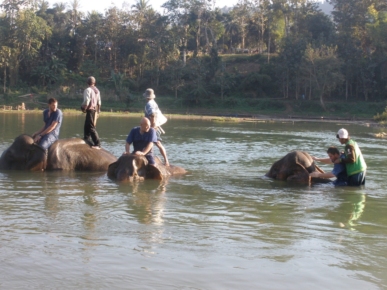 Bathing with Elephants.