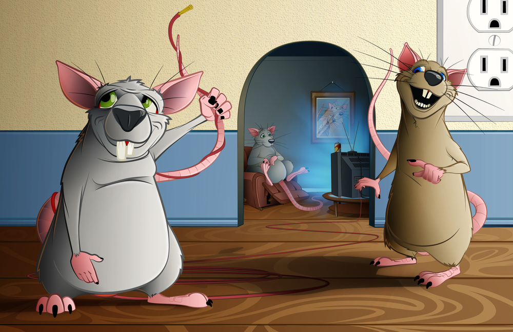house rats