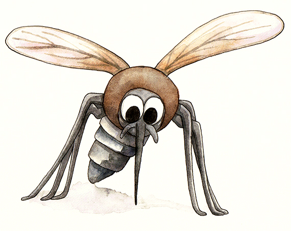 Mosquito Illustration by Amanda Farquharson