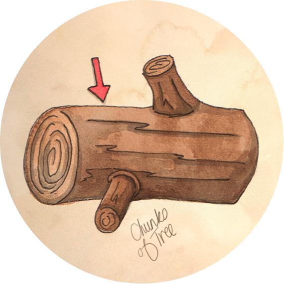 What Finnegan Ate Tree illustration by Amanda Farquharson