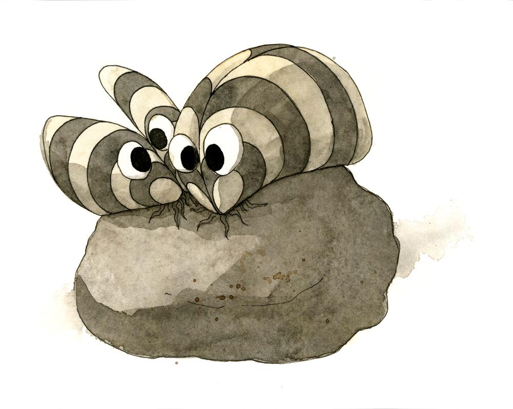 Zebra-Mussel-Painting.jpg