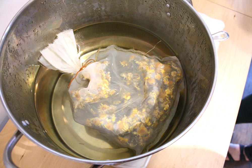 "Here is our giant ""tea bag"" of Dyers Chamomile that Thea grew in her own garden, just added to the pot of water. So pretty, dyeing with flowers!"