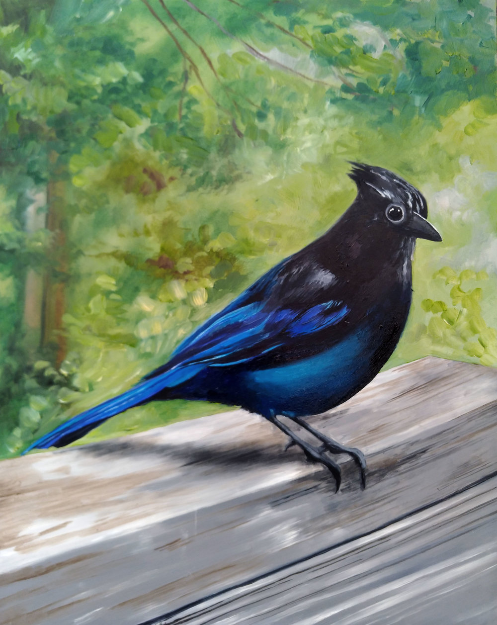 Stellar's Jay Commission from 2018 - 8 x 10 Oil on Panel