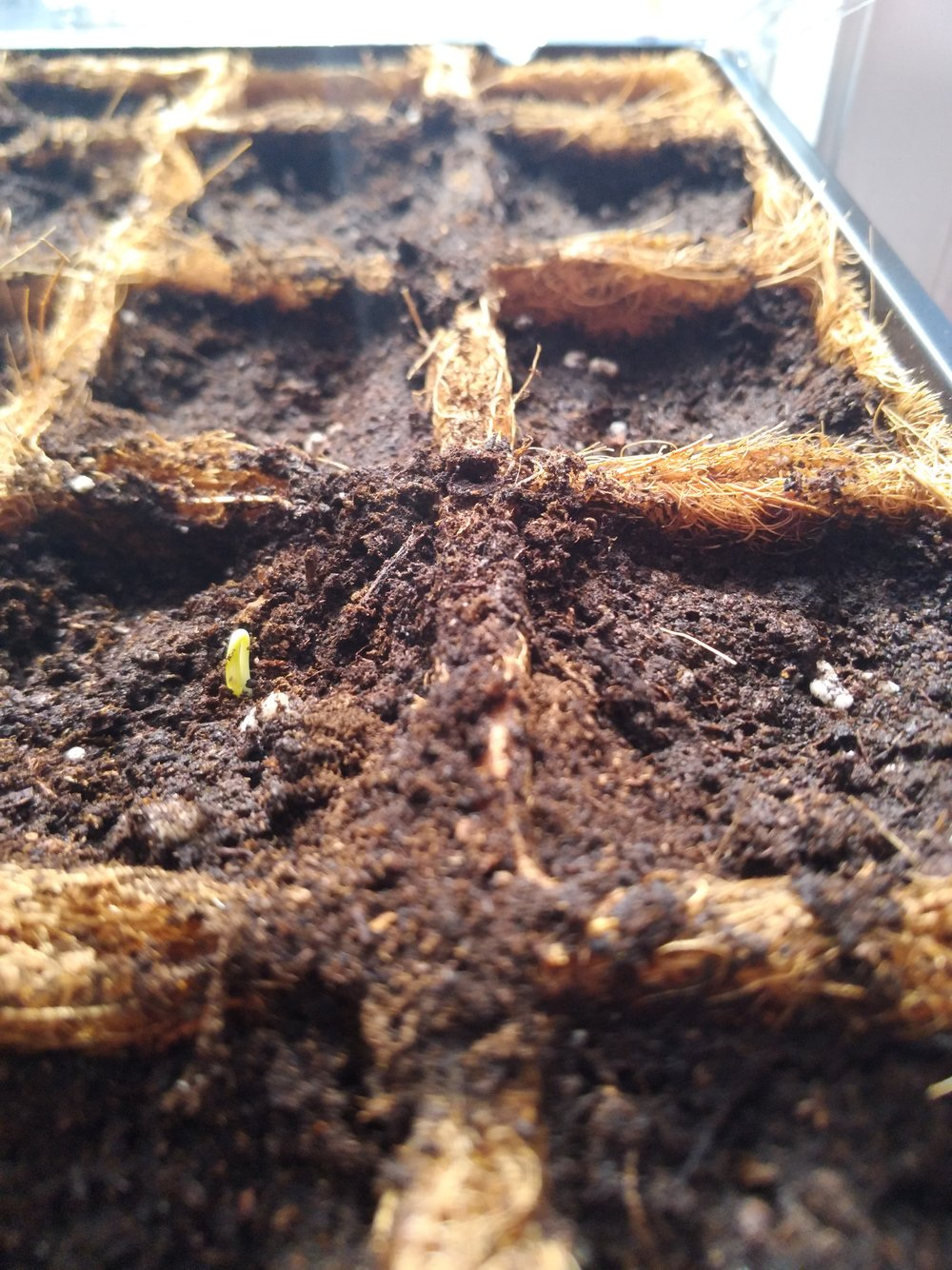 Our first sprout!