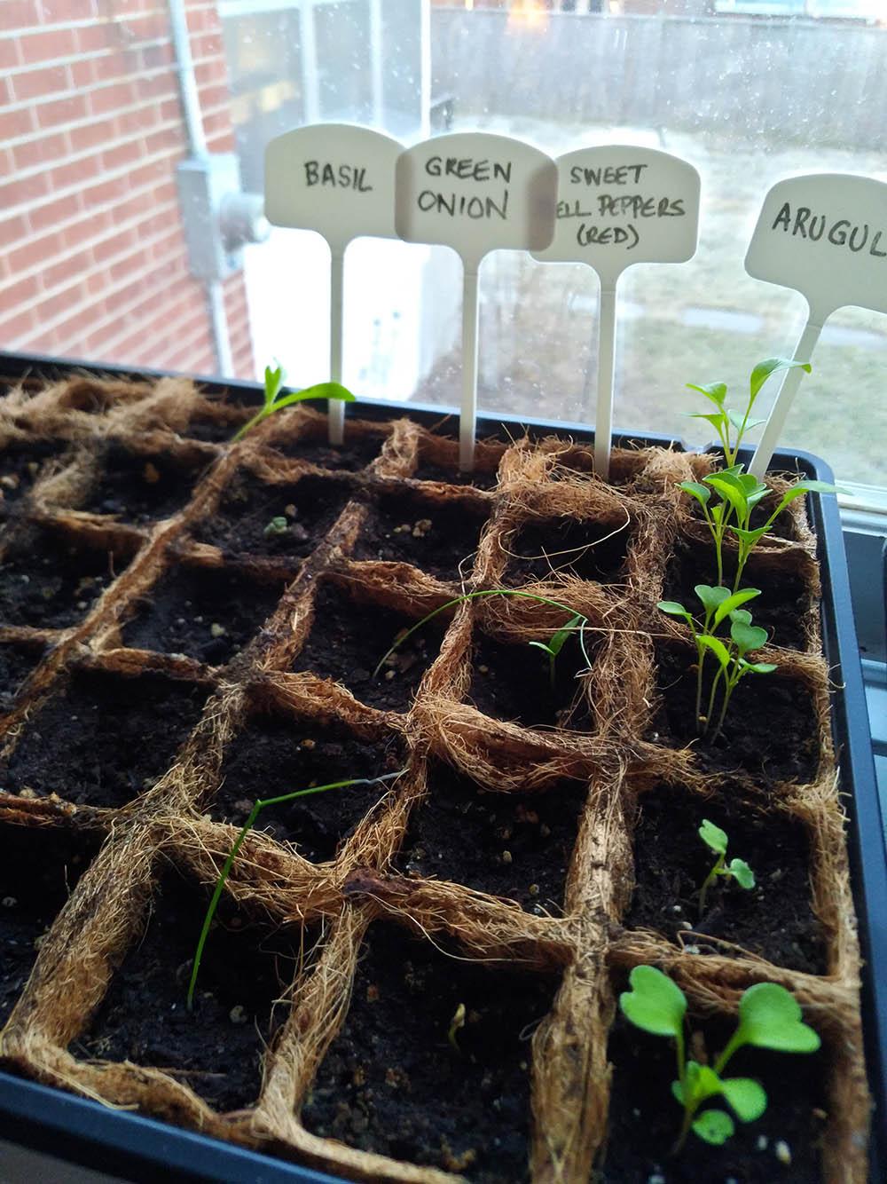 Checking on my seedlings!