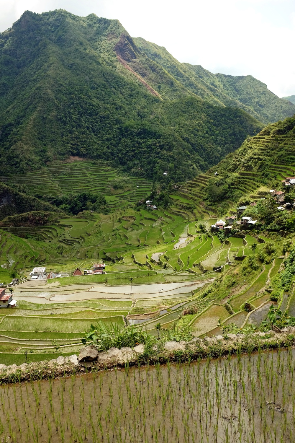 The view as we descended into the Batad rice terraces on our way to Tappia Falls.