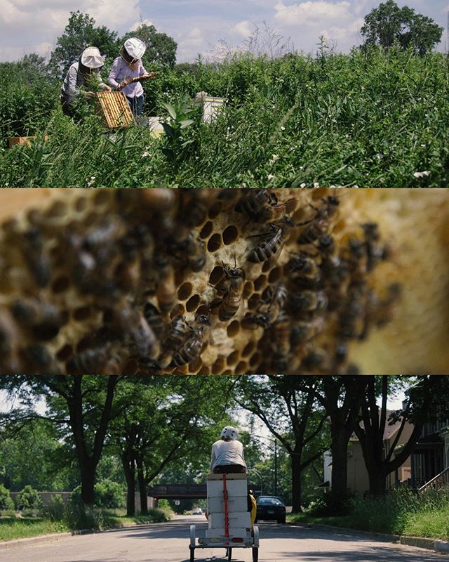 Some frames from yesterday, following @bikeabee around Chicago's south side as she tends to her bees by bike. . . . . . . . . #frames #framez #cinematography #documentary #urbanfarming #urbangarden #chicago #farms #bees #beekeeping #urbanbeekeeping #chicagobeekeepers #urbanapiary