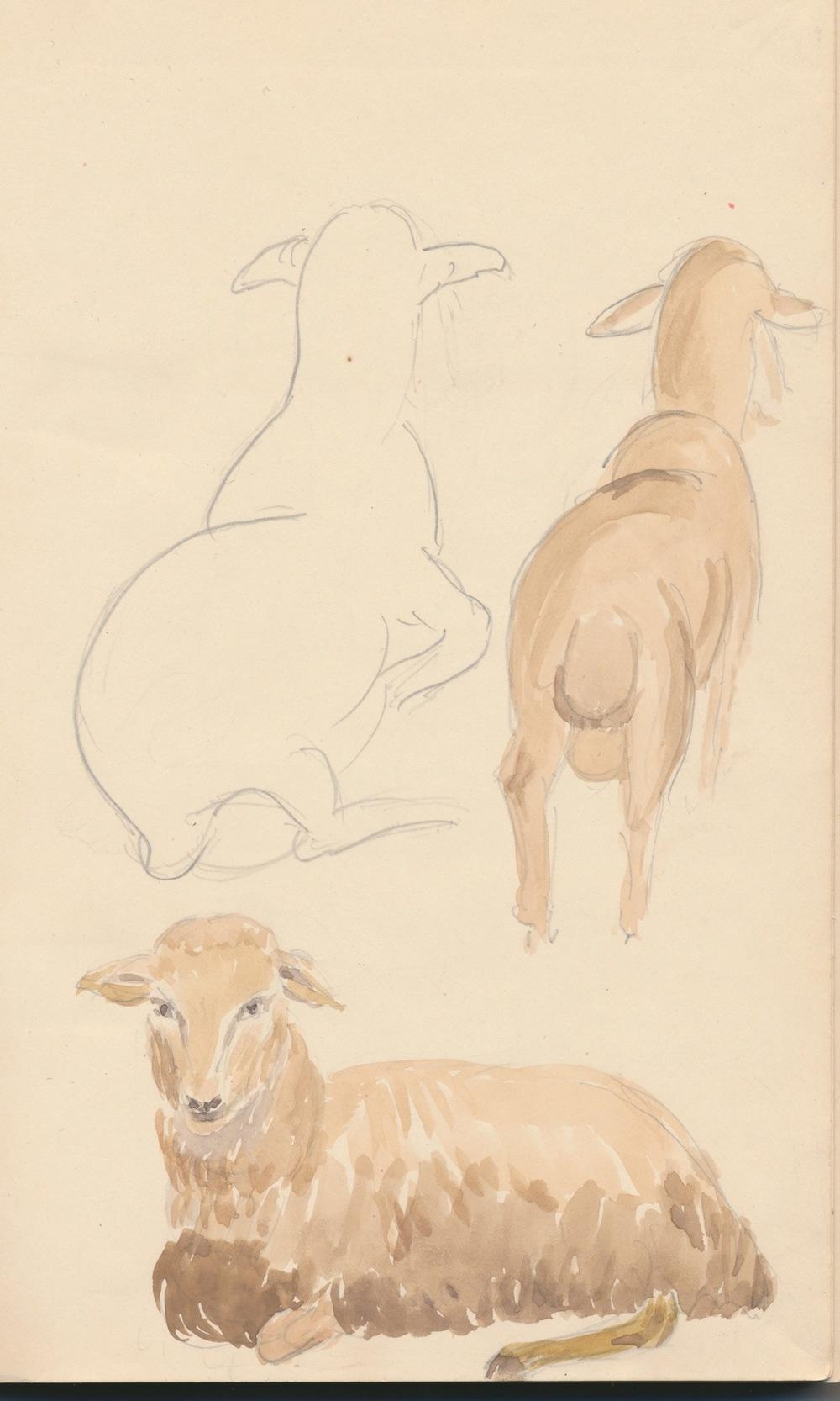 Animals011.jpg