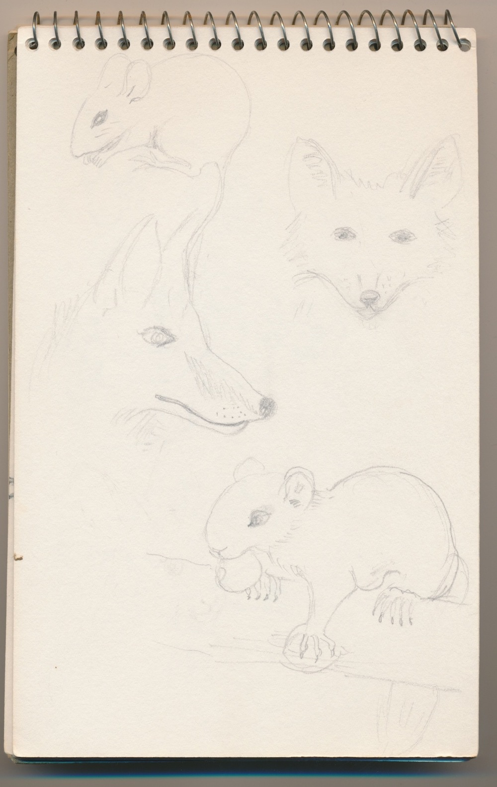 Animals017.jpg