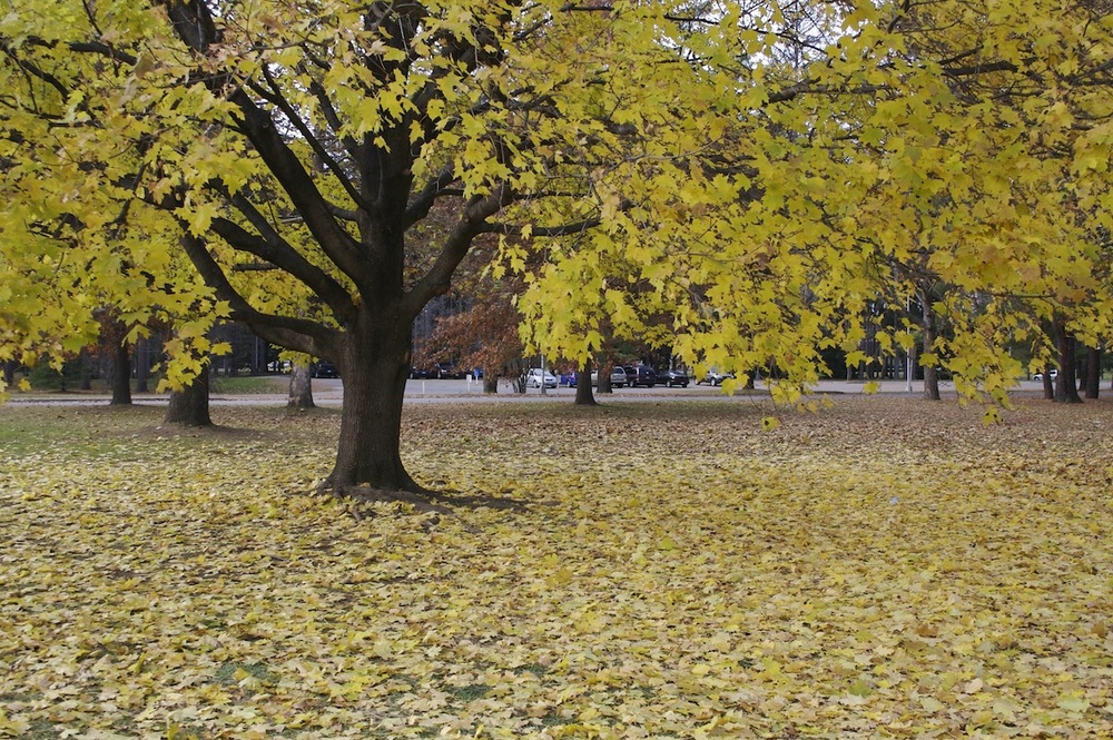 Trees02.jpg