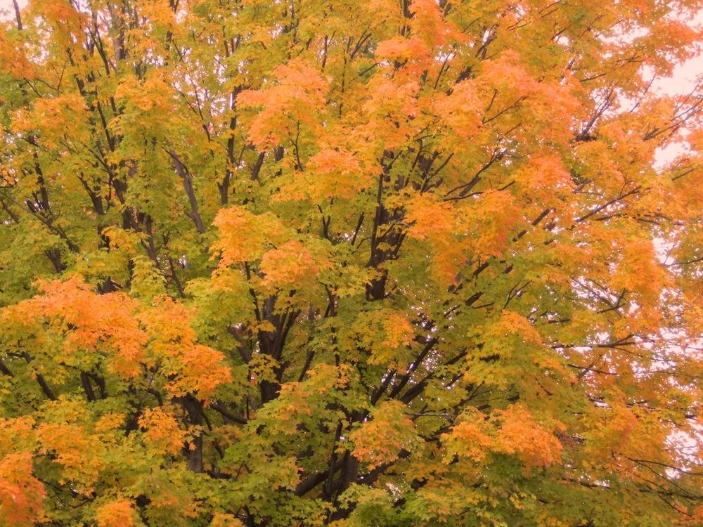 Trees08.jpg