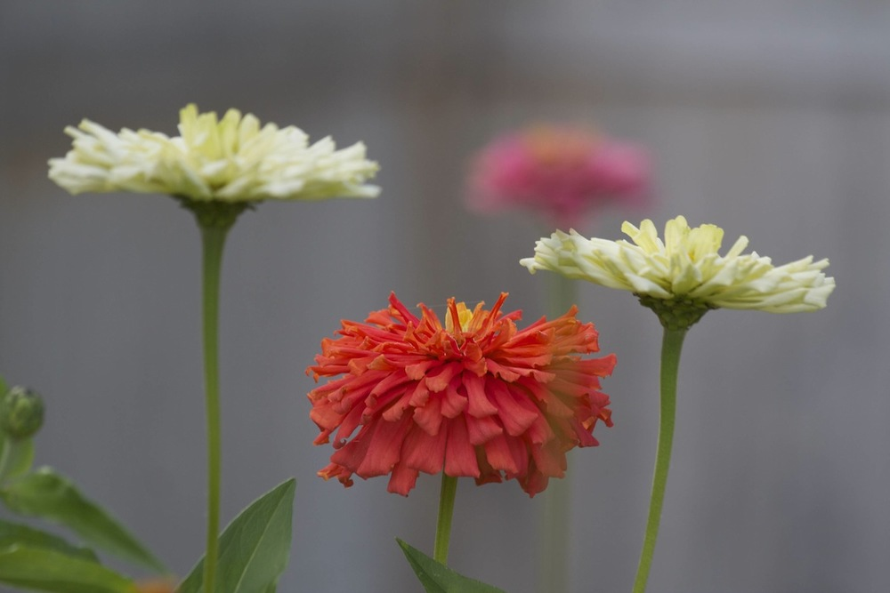 Flowers28.jpg