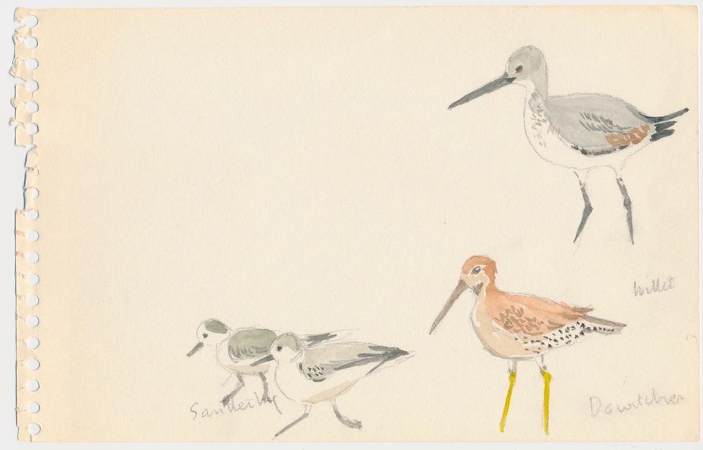Birds006.jpg