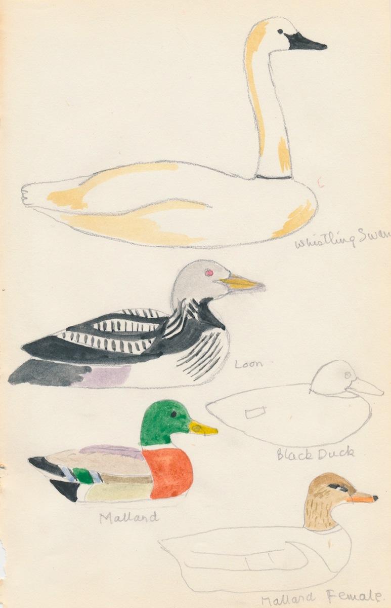 Birds004.jpg