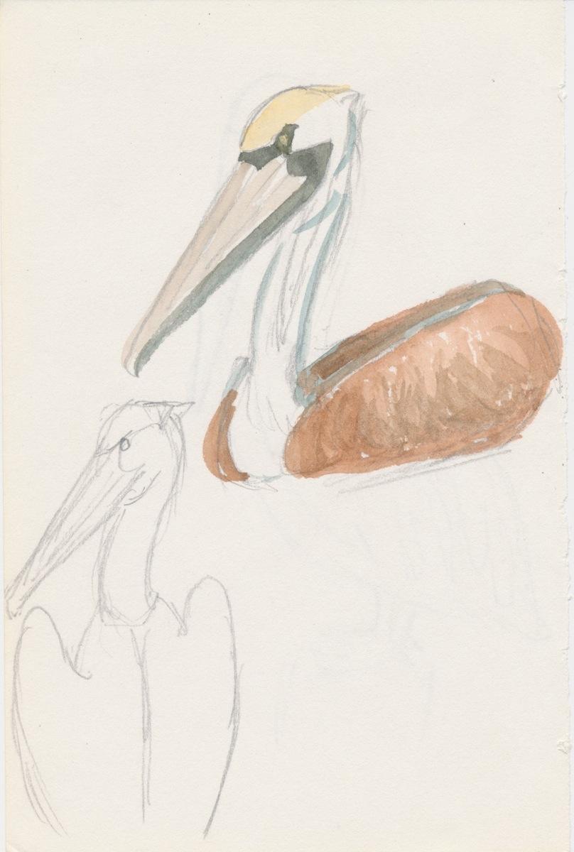 Birds010.jpg