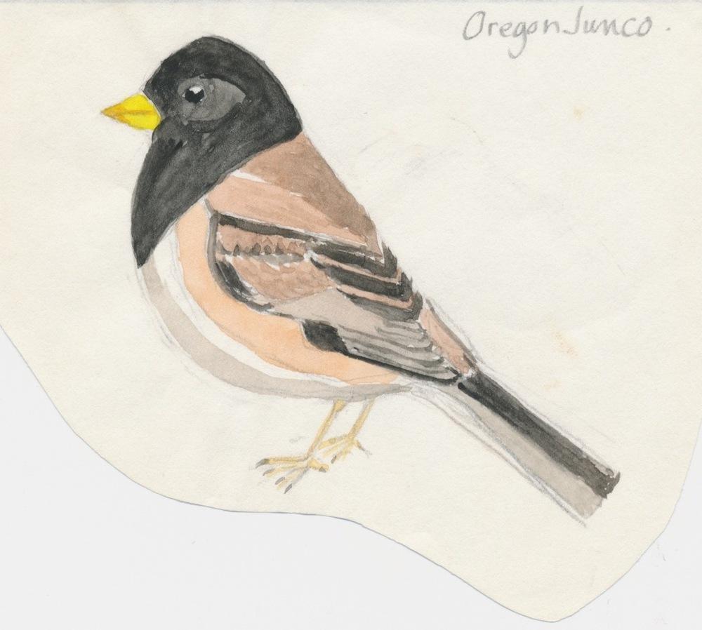 Birds013.jpg