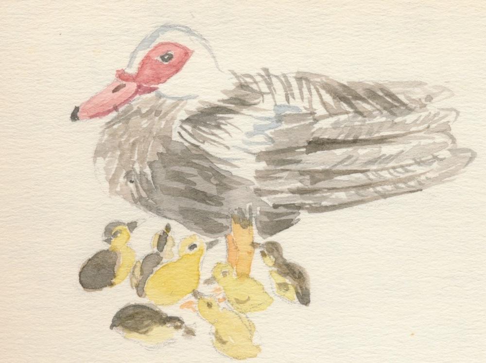 Birds015.jpg