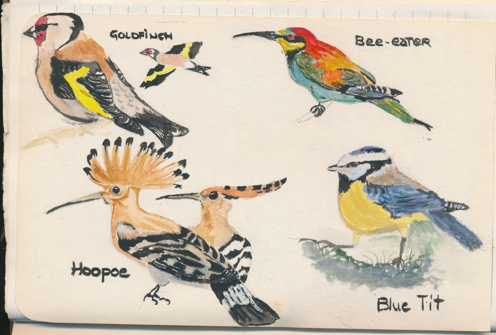 Birds018.jpg