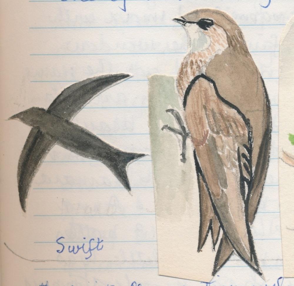 Birds020.jpg