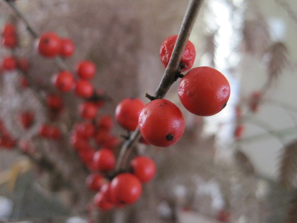 Holly berries1.jpg