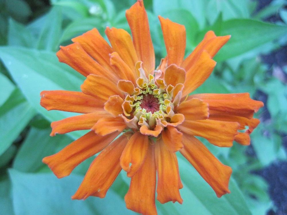 Flowers25.jpg