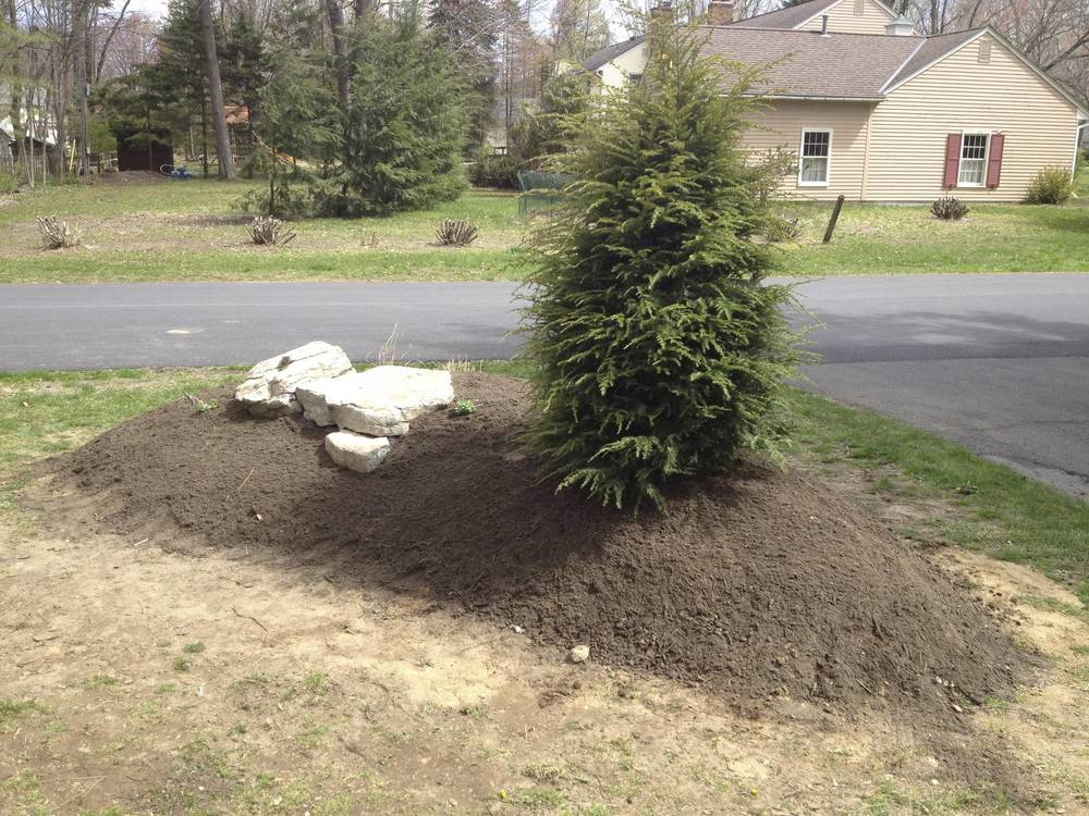 Then, we added a Canadian Hemlock and some stones to form the backbone of the berm.