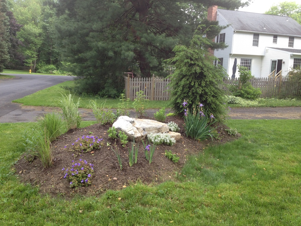 Grasses,  irises, beebalm and other plants take root.