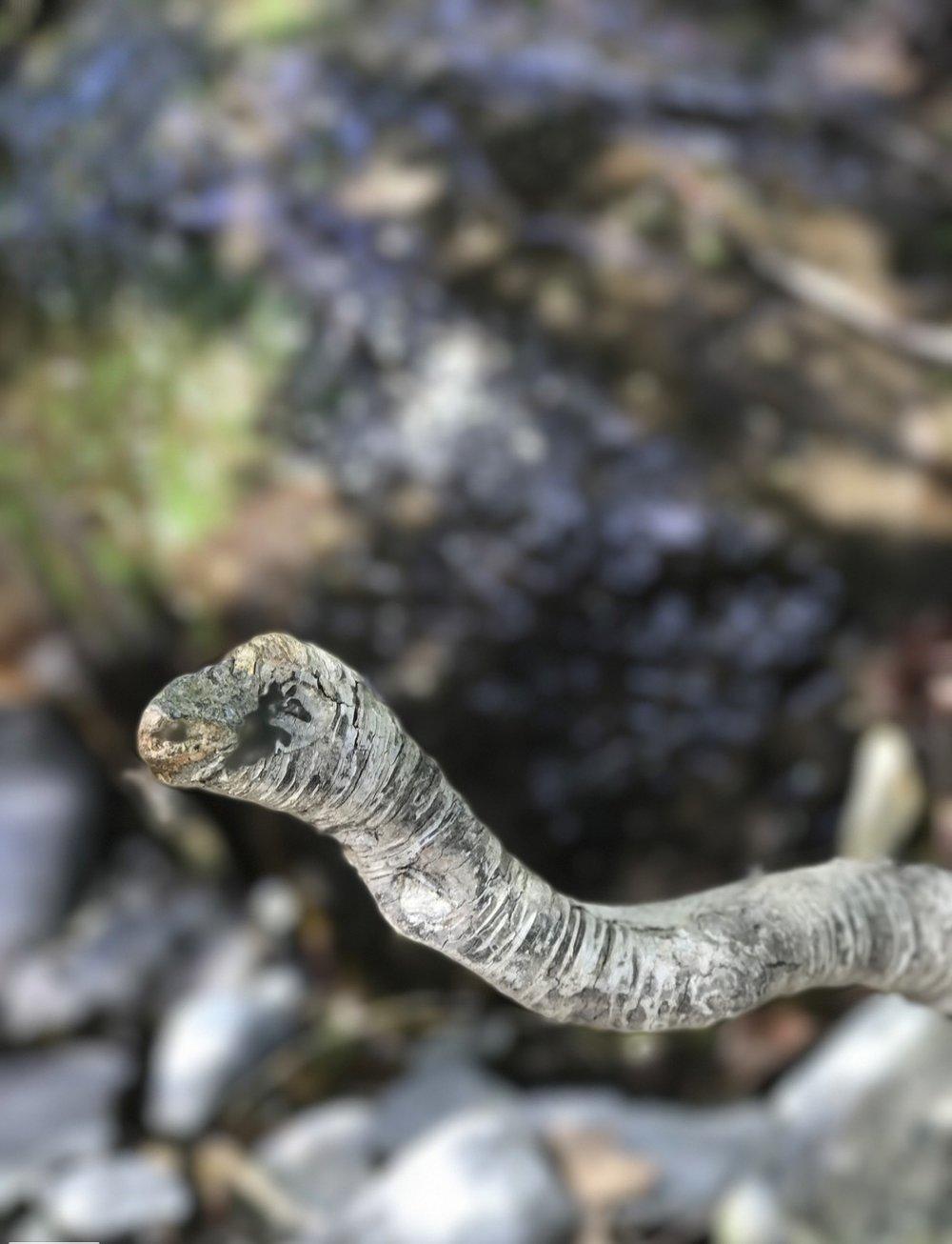 Snake Driftwood