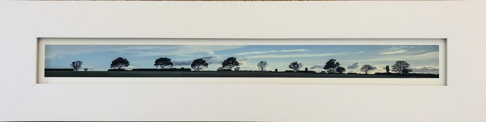 Tree Line, Thirsk  (North Yorkshire, UK. iPhone 7+ (f1.8, 1/600, 5/13/17) ©2017 Sean Walmsley;