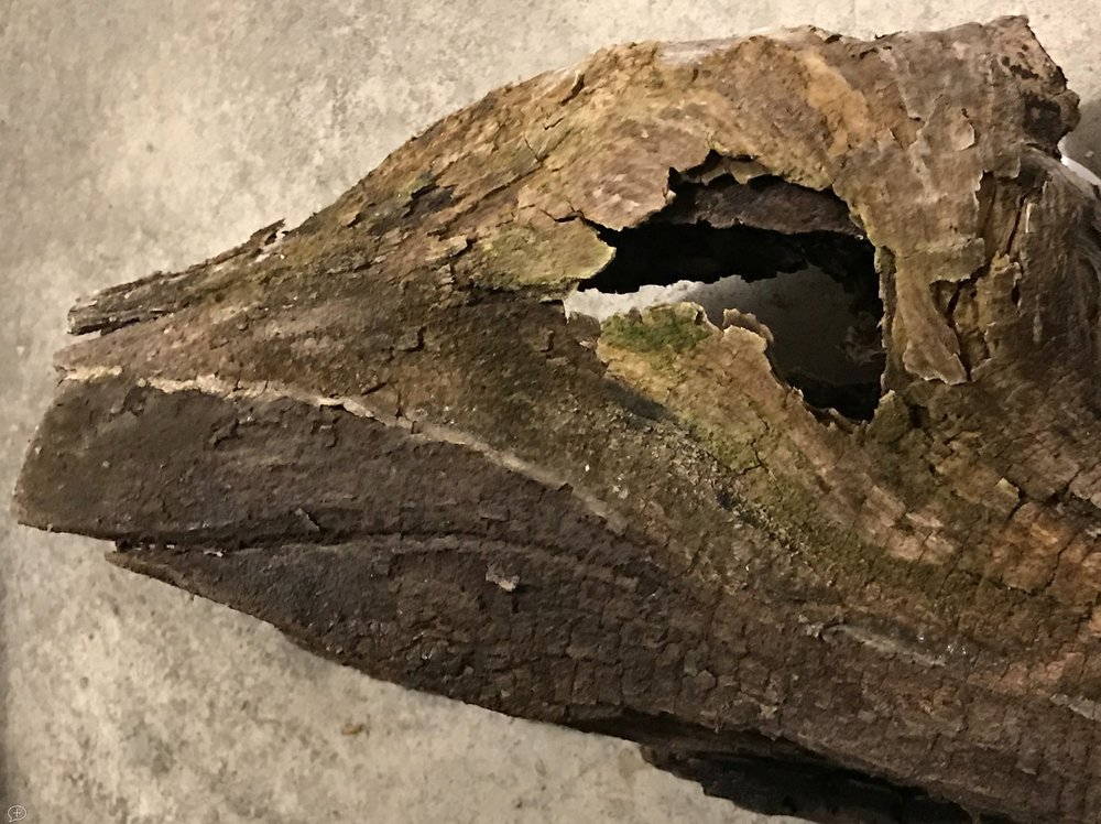 "1.  Dinosaur . iPhone7+. Saratoga Springs, NY, 2017. Canvas Photo, 20"" x 16"". This photo is just a piece of driftwood I found in an Adirondack stream. But it surely has the look and feel of a dinosaur!  ©2017 Sean Walmsley"