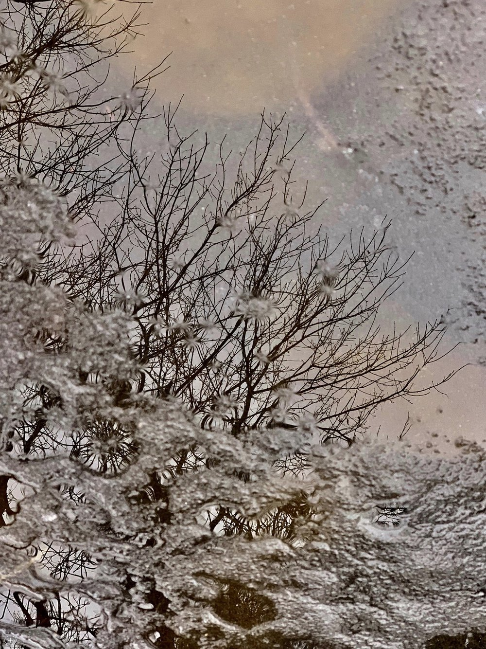 """7.  Reflections in my Pond-2.  iPhone XS, 2018. Saratoga Springs, NY. (Canvas Photo, 18"""" x 24.""""). This photo, taken 10 days after the previous one, shows a much different view, more impressionistic. That's snow frozen onto the surface, with ice barely hiding lily pads underneath.  ©2018 Sean Walmsley;"""