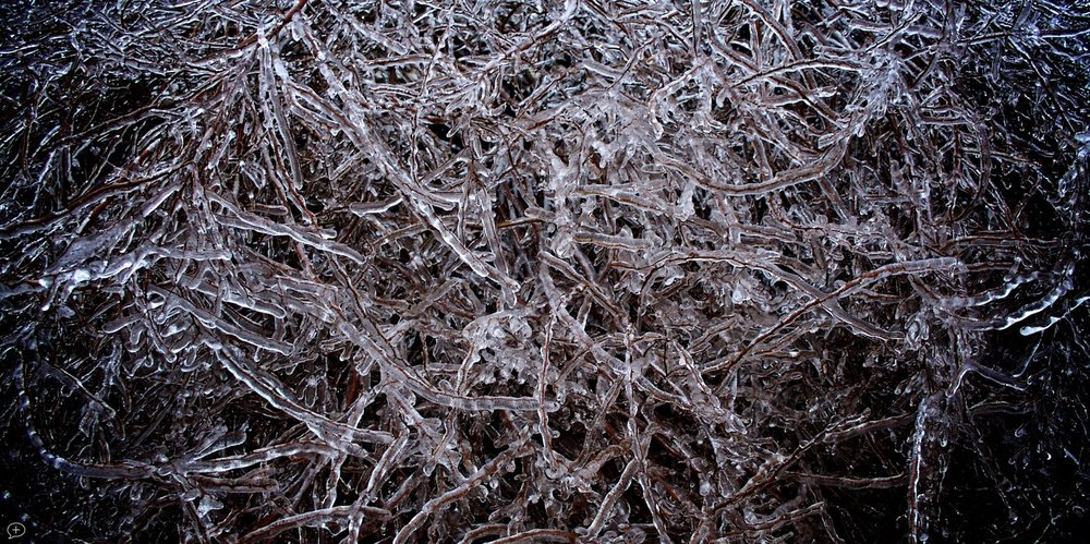 "18.  Ice Tangle , Canon Powershot SD2000 IS, 2010. Saratoga Springs, NY. (Canvas Photo, 40"" x 20""). Although icy conditions are brutal on walking and driving, they do provide great opportunities for photography, and I try to take advantage of them.  ©2010  Sean Walmsley"