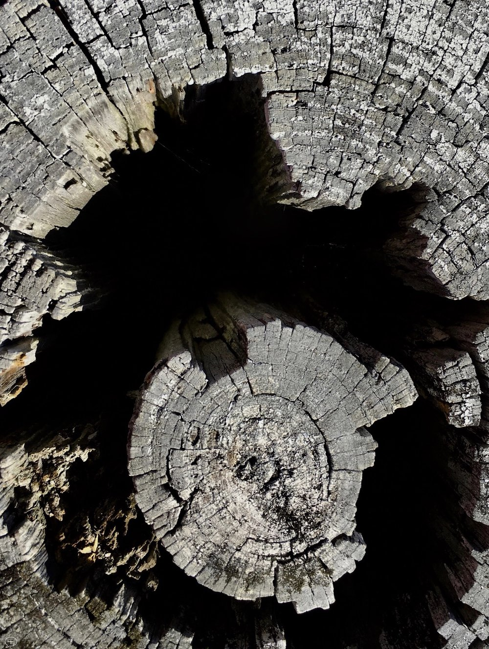 """21.  Looking into the Abyss , iPhone 6S, 2016. Saratoga Battlefield, NY. (Canvas Photo, 40"""" x 30,""""). When I tell people this photo is only looking down into a stump at the Saratoga Battlefield, they often don't believe me. But that's what it is. Of course, what it looks like to a viewer is quite another thing! What does it remind you of?  ©2016  Sean Walmsley"""
