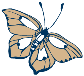Freudenthal-Home-Health-Butterfly.png