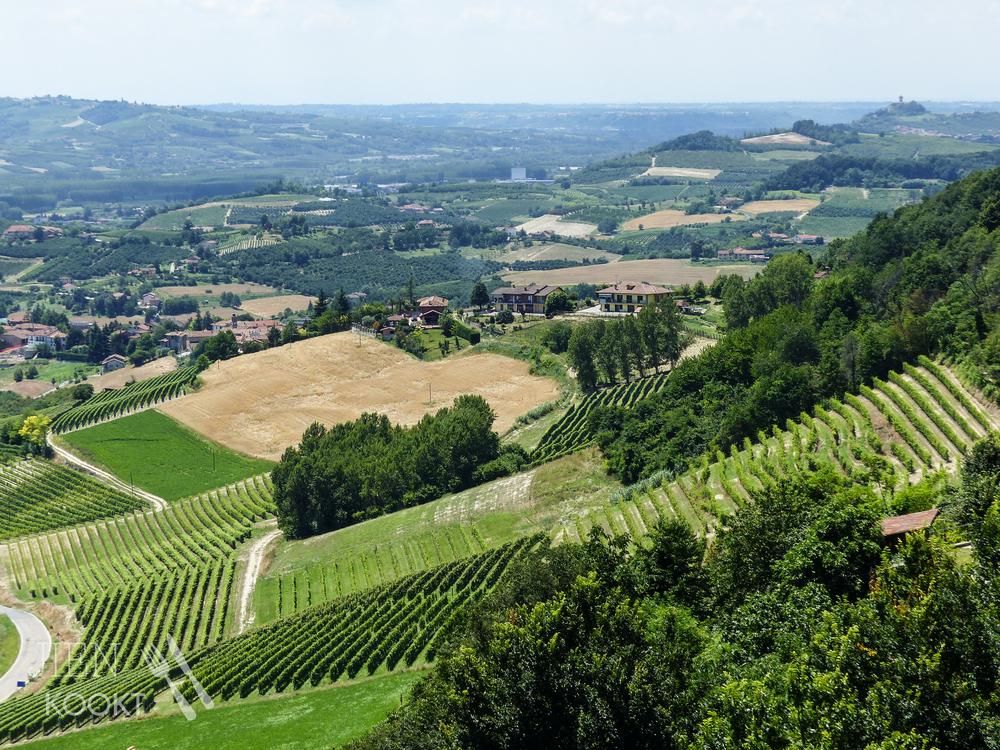 Wijnvelden in de Piemonte