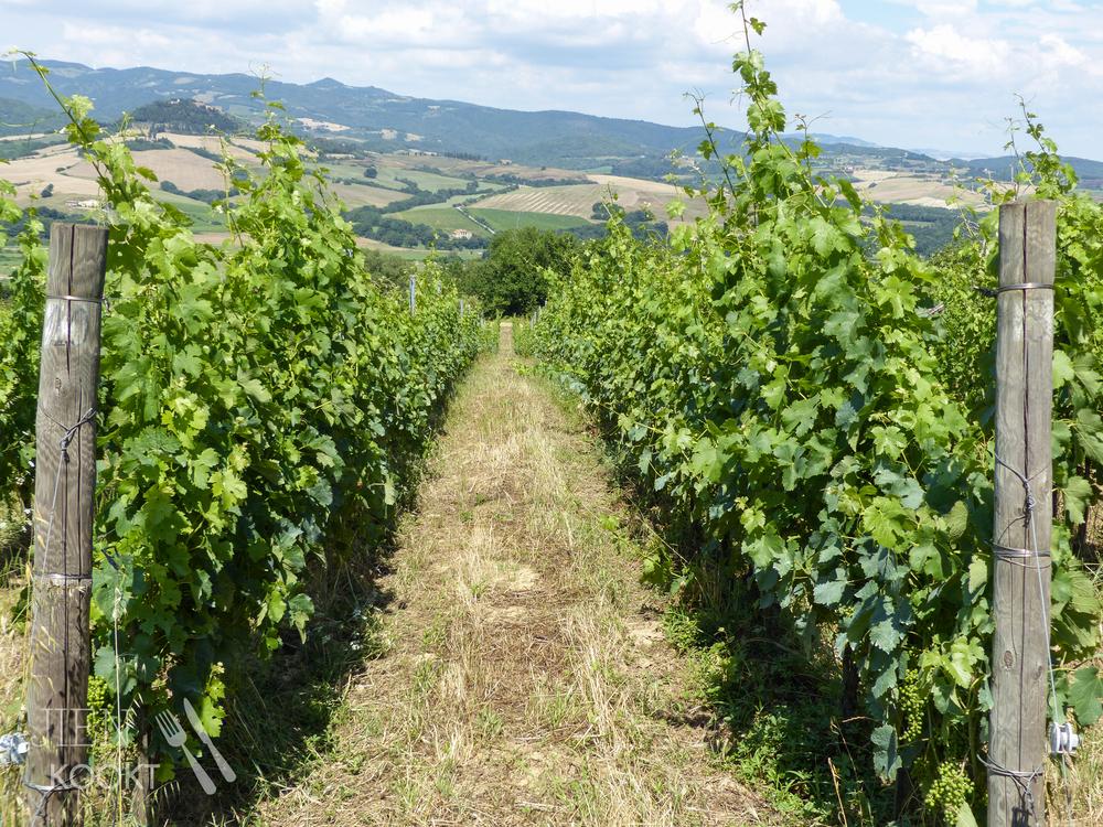 De wijngaarden van Fontemorsi in Montescudaio, Toscane