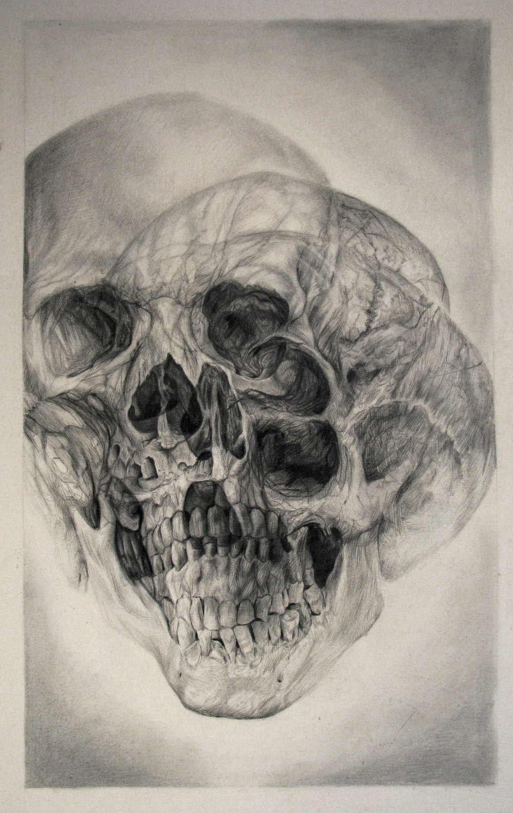 Golden Means (Skull Spiral) 36x25in. graphite on canvas.jpg