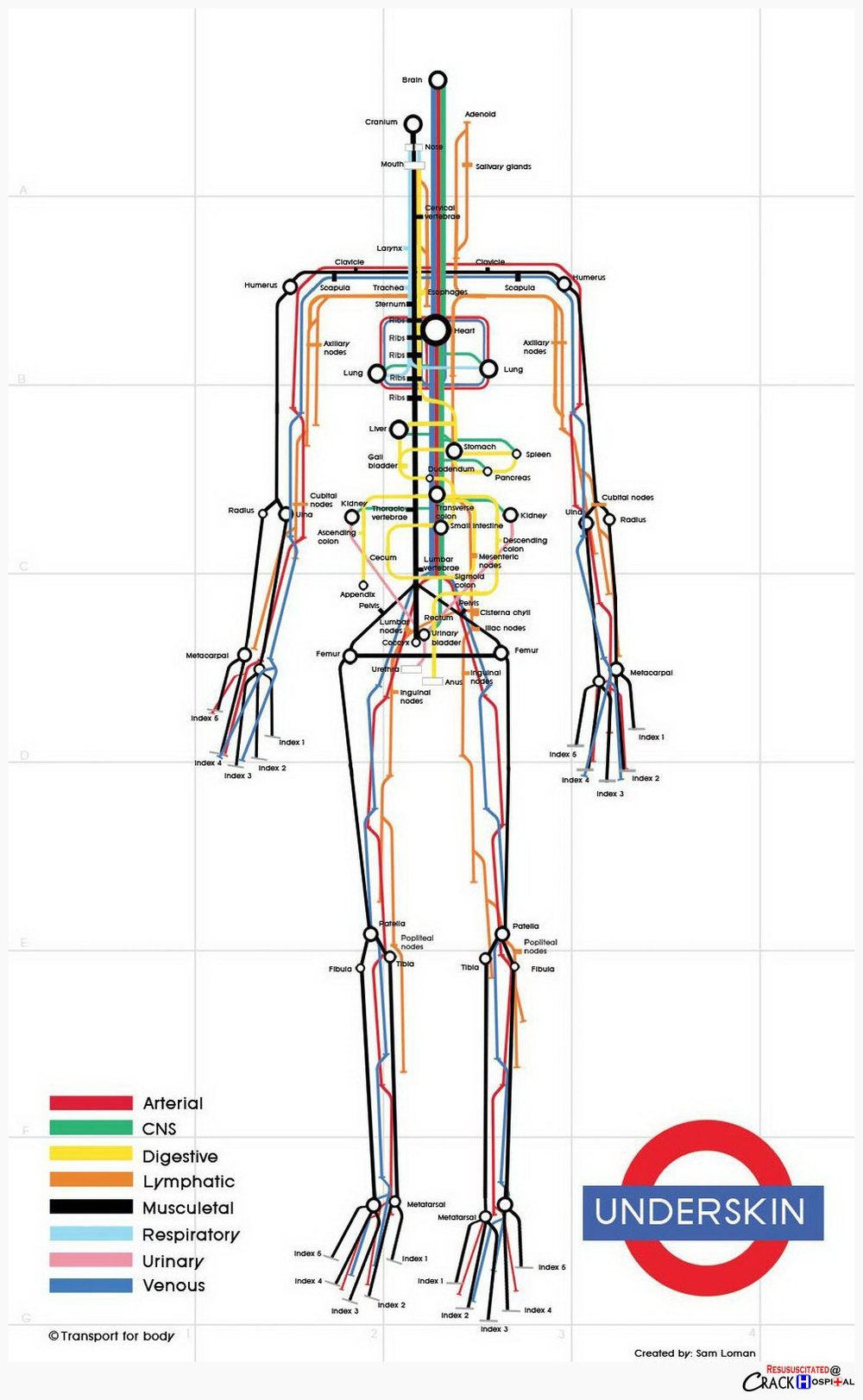 "The Human Underskin Courtesy of Dutch designer Sam Loman, this map breaks down the human body into a skeletal form, and, riffing on the London Underground map, uses different subway routes — ""Digestive,"" ""Respiratory,"" ""Arterial,"" etc. — to trace our strange physiognomies."