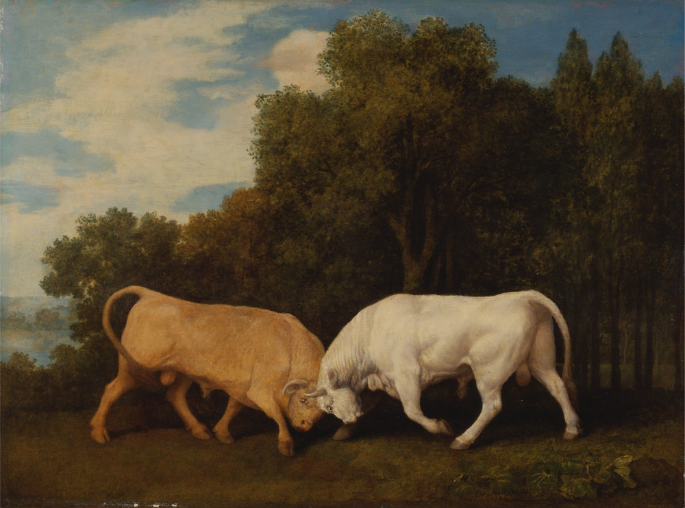 Bring it, Gingernuts.   Credit: George Stubbs.  Bulls Fighting . 1786.  Yale Center for British Art , Paul Mellon Collection