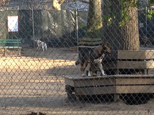 "Even this pup feels the vibe is less ""dog run,"" more ""prison yard."""